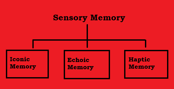 Chapter 7 - Our psychology |Sensory Memory Examples Psychology